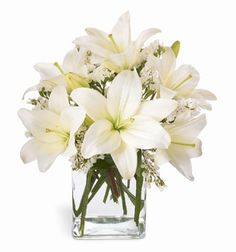 Lovely white Asiatic lilies are a wonderful way to celebrate a special day - or make an ordinary day special! Enhanced with sprays of white statice, our lilies are beautifully arranged in a clear glass vase.   SAME DAY DELIVERY OF ABOVE at  herbalorg.com