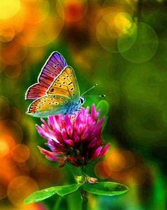 (Love) A butterfly with rainbow colors.