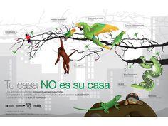 Tu casa no es su casa. Los animales silvestres no son buenas mascotas. Comprandolos, contribuyes a un comercio ilegal que acelera su extinción y pone en riesgo la salud humana.