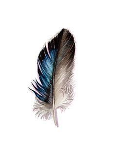 Mallard Feather  Original Watercolor feather study by jodyvanB, $45.00