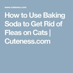 How to use baking soda to get rid of fleas on cats leavening how to use baking soda to get rid of fleas on cats cuteness ccuart Images