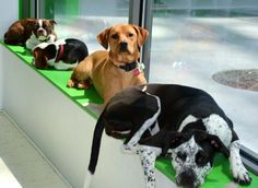 Relax, relax, relax...in doggy daycare - Williamsburg, Brooklyn, NY.