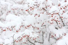 Tutorial: Photographing Snow, by Canon