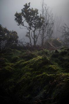ominousraincloud:ILKLEY MOOR- MORNING MIST 2 | By Rupert Nicholson