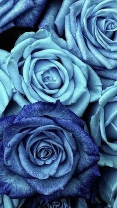 Calming Backgrounds, Cute Backgrounds, Light Blue Roses, Blue And Purple Flowers, Rose Wallpaper, Galaxy Wallpaper, Blue Wallpapers, Iphone Wallpapers, Calming Pictures