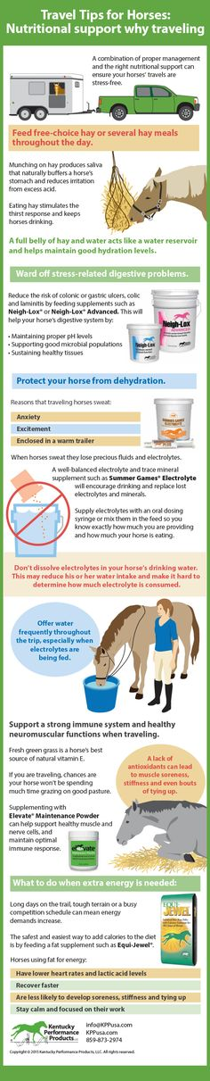 If your horse doesn't drink well, start electrolytes the day or two before you travel and water the hay before you hang the bag in the trailer.