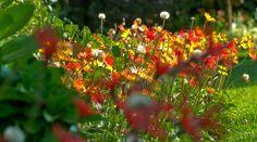flores by Jorge  Pacas,