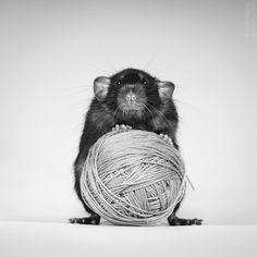 My rats by AnnaTyurina on deviantART