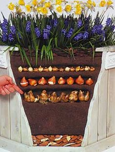 Guide to Planting different sized Bulbs in a container.
