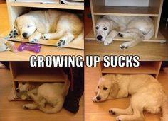 Growing up sucks!