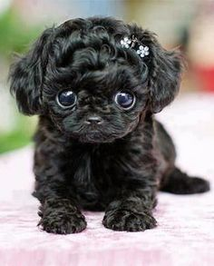 The cutest dog ever