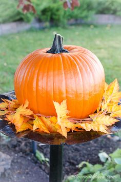 how to prepare a pumpkin for steaming