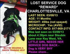 CHARLOTTESVILLE, VA......*****LOST****STILL MISSING SERVICE DOG!!!