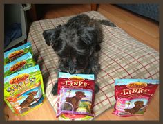 Oz the Terrier: #FuelTheLove with Zuke's