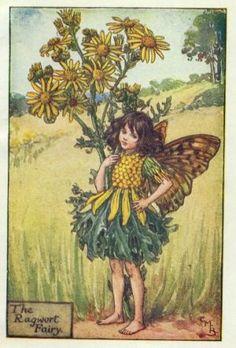 Ragwort Flower Fairy Print c.1927 Fairies by Cicely Mary Barker
