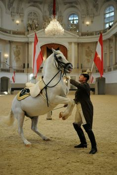 The majestic Spanish Riding School! You can see a full performance or just pop in to see morning exercises. — in Vienna, Austria.