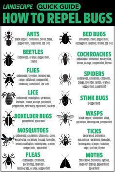 10 Essential Oils That Repel Bugs + Bug Spray Recipe, Diffuser Blends, and m. -Top 10 Essential Oils That Repel Bugs + Bug Spray Recipe, Diffuser Blends, and m.