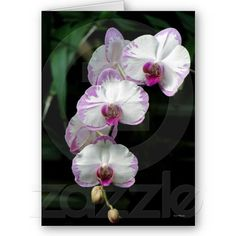 Cascading Orchid Beauties Greeting Cards by birdersue from Zazzle - Digital photography and design by Sue Melvin