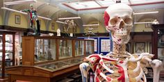 Members of the public can gain an insight into Edinburgh's illustrious history with a visit to the University's Anatomical Museum.
