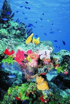Snorkeling in Cozumel, Mexico. Pictures do not truly capture its beauty.  The secret is to keep fish food in your pocket!