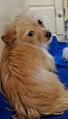 ADOPTED This little angel is so scared and she is looking for reassurance from the beautiful kennelmate she just met. Please SHARE, she needs help and a FOSTER would save her life. Thanks!  #A4817728 I'm an approximately 1 year old female terrier. I am not yet spayed.  https://www.facebook.com/171850219654287/photos/pb.171850219654287.-2207520000.1429210329./396512033854770/?type=3&theater
