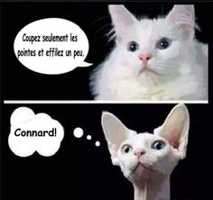 Funny Cat Memes 594404850789031280 - Chat chez le coiffeur Source by co_pinon I Love Cats, Crazy Cats, Cute Cats, Funny Cats, Funny Animals, Cute Animals, Memes Chats, Cat Memes, Funny Memes