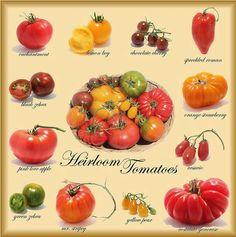Tomato Plants: Acquired