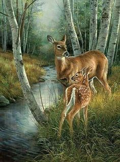 Doe and Fawn Stream Scene colored example Deer Photos, Deer Pictures, Animal Pictures, Wildlife Paintings, Wildlife Art, Animal Paintings, Animals And Pets, Cute Animals, Deer Art