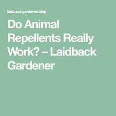 Do Animal Repellents Really Work? – Laidback Gardener