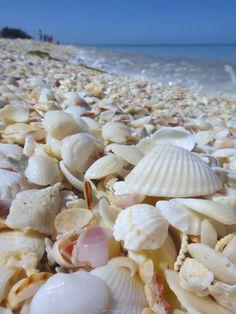 Seashells on the beach #BrettRobinson