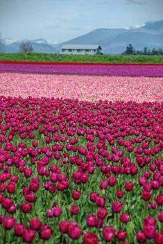 ⁀⋱‿🍃🌸🍃 Bom dia! Que um manto de flores contagie nosso dia. Que seja leve, perfumado e colorido. Que possamos colher bençãos por onde quer que estejamos. Que Seja um dia de Paz!  ⁀⋱‿🍃🌸🍃 ✍ Luciano Bueno