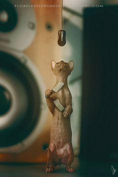 25 кото-манипуляций