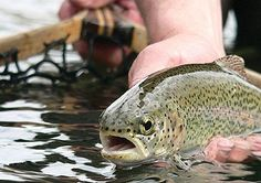 West Virginia trout fishing - love to fish my home state!