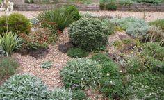 Kiesgarten: Steine, Gräser und bunte Blumen -  Ein Kiesgarten ist mit seinen Gräsern und Blütenstauden im Spätsommer besonders attraktiv. So verwandeln Sie Ihr Grundstück in ein farbenfrohes Blütenmeer.