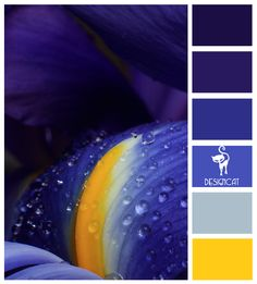 Iris: Purple, Yellow - colour Inspiration pallet (and I know it's not Starry Night, but Van Gogh did paint irises :) ) #dawninvitescontest