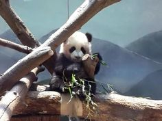 Remember the adorableness of baby Po? We do! #ZAFanFriday photo from Facebook user Tanya M.