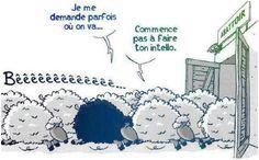 mouton-conformisme