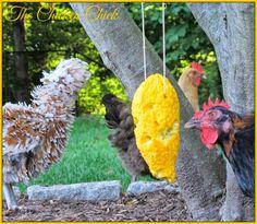 Summer Squash Piñata boredom buster for chickens Chicken Toys, Chicken Treats, Chicken Chick, Chicken Squash, Boredom Busters, Raising Chickens, Chickens Backyard, Summer Squash, Cucumber