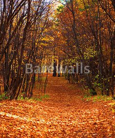 """mn forest scene, road in the forest"" - Autumn posters and prints available at Barewalls.com"