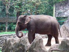 10 animais em extinção que podem desaparecer ainda este ano - greenMe.com.br