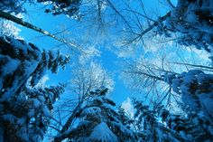 Find out: Winter Snow HD Pictures wallpaper on  http://hdpicorner.com/winter-snow-hd-pictures/