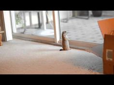 Energetic Baby Prairie Dog Teases A Perplexed But Very Tolerant House Cat
