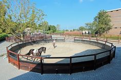 Lunging your horse in a very fancy outdoor lunging arena.
