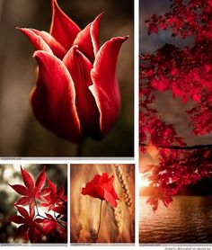 brown and red Love Collage, Beautiful Collage, Make Your Own Collage, Collages, Red Cottage, Beautiful Color Combinations, Animation Background, Colour Board, Shells