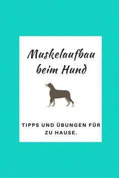 Muskelaufbau beim Hund - Tipps und Übungen für zu Hause.