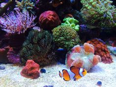 Saltwater Aquarium Beginner, Reef Tanks, Fish, Pets, Animals, Animals And Pets, Animales, Animaux, Animais