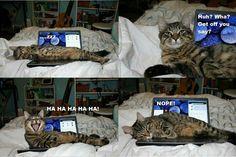 HA HA HA HA - Funny Cat
