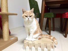 岡田モフリシャスと猫の小雪 (@moflicious) | Twitter
