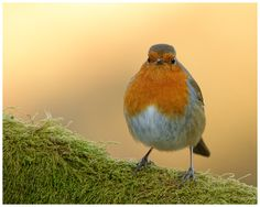 Who ate all the worms? by Geoffrey Baker, via 500px