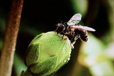 Reportaje/ Las abejas, fieles aliadas para la seguridad alimentaria mundial